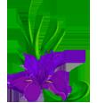 Логотип ИРИС